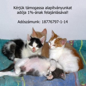 IMG_1706 2 szöveg 2000x2000